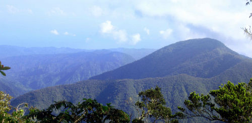 Jamaica blue mountains region
