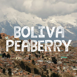 Bolivia Peaberry Coffee