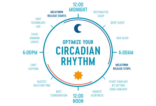 circadian rhythm and coffee